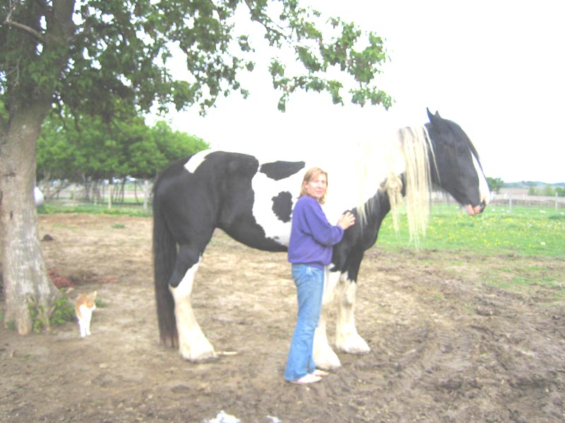 Holy Cow is that a big horse